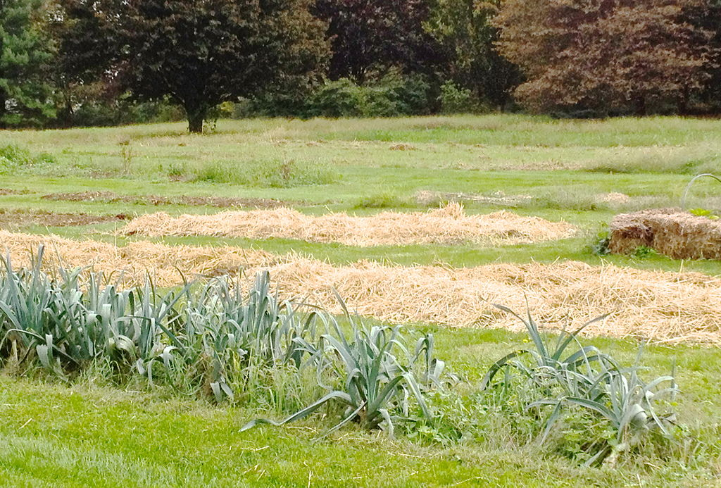 Straw Mulch at the Rodale Farm Garden